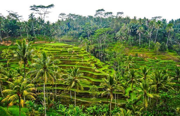 Bali au Naturel - naturally naked in Bali