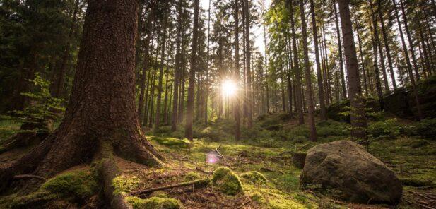 Hotel zum Walde - naturist spa in Germany